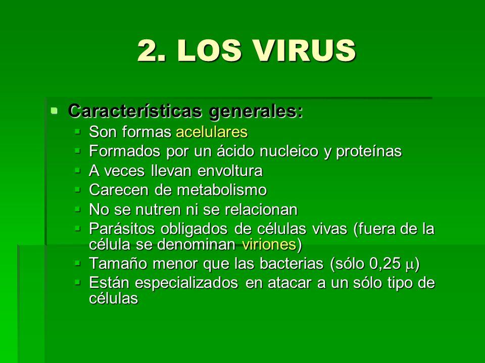 2. LOS VIRUS Características generales: Características generales: Son formas acelulares Son formas acelulares Formados por un ácido nucleico y proteí