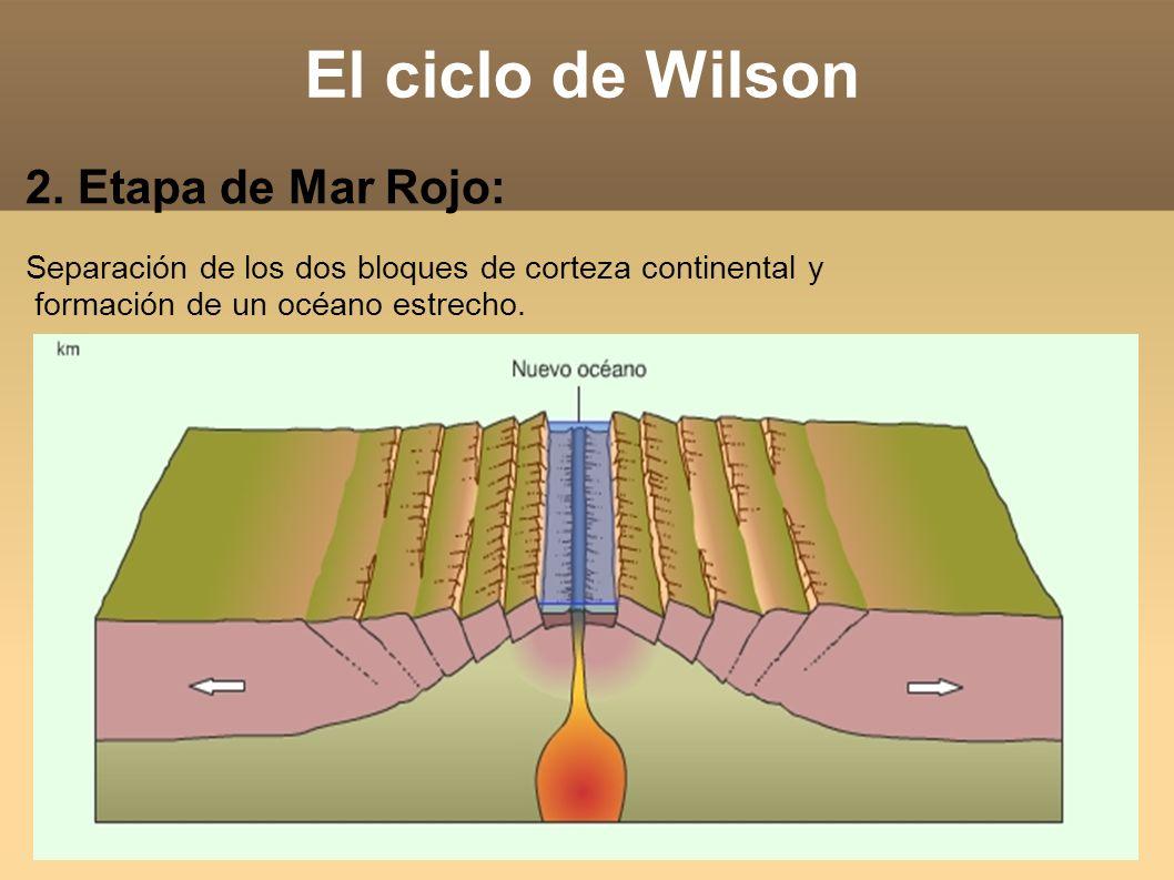 El ciclo de Wilson 2. Etapa de Mar Rojo: Separación de los dos bloques de corteza continental y formación de un océano estrecho.