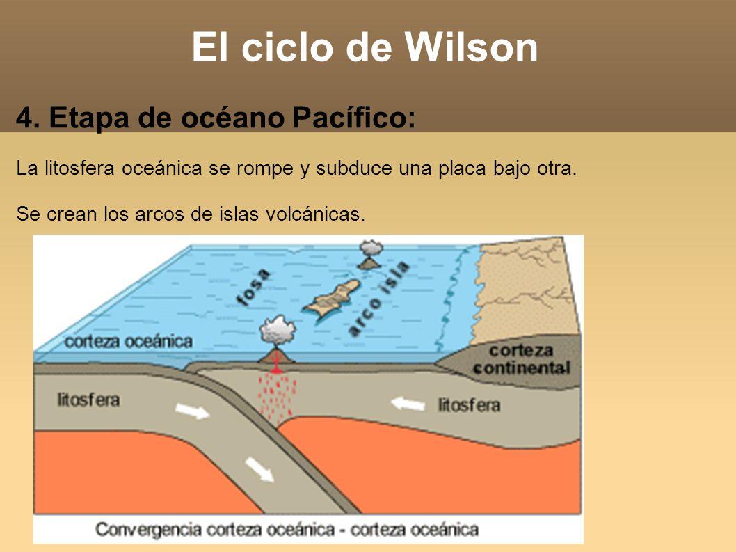 El ciclo de Wilson 4. Etapa de océano Pacífico: La litosfera oceánica se rompe y subduce una placa bajo otra. Se crean los arcos de islas volcánicas.