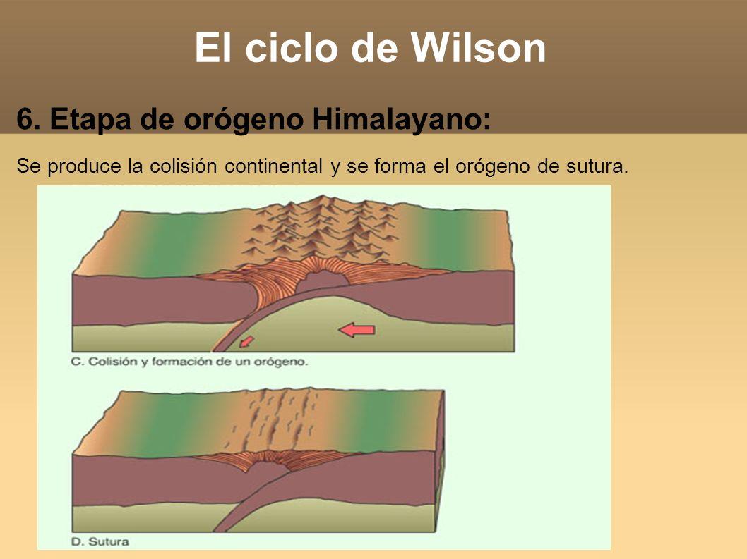 El ciclo de Wilson 6. Etapa de orógeno Himalayano: Se produce la colisión continental y se forma el orógeno de sutura.