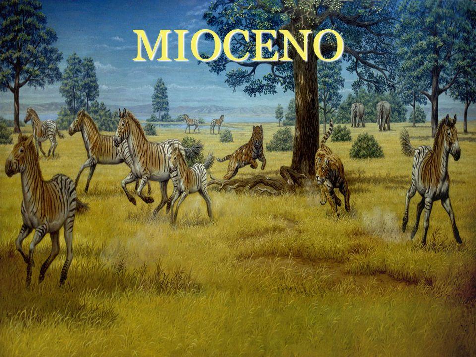 MIOCENO 4º Período geológico de la Era Cenozoica 23,03 mill.