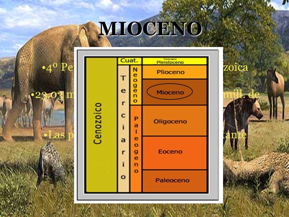 MIOCENO 4º Período geológico de la Era Cenozoica 23,03 mill. de años ………………. 5,332 mill. de años Las plantas y los animales eran bastante modernos
