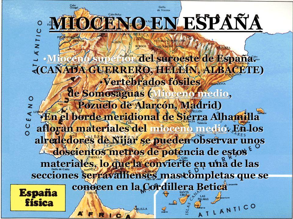 MIOCENO EN ESPAÑA Mioceno superior del suroeste de España. (CAÑADA GUERRERO, HELLÍN, ALBACETE)Mioceno superior del suroeste de España. (CAÑADA GUERRER