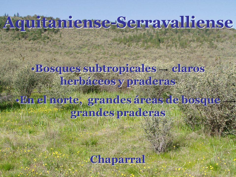 Aquitaniense-Serravalliense Chaparral Bosques subtropicales claros herbáceos y praderasBosques subtropicales claros herbáceos y praderas En el norte,