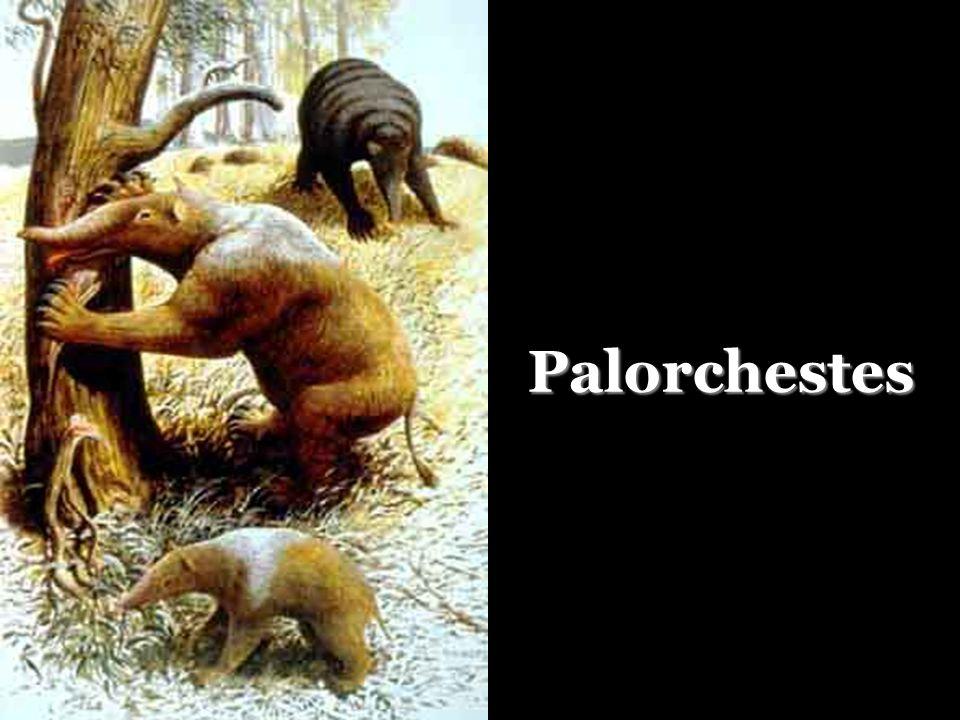 Palorchestes