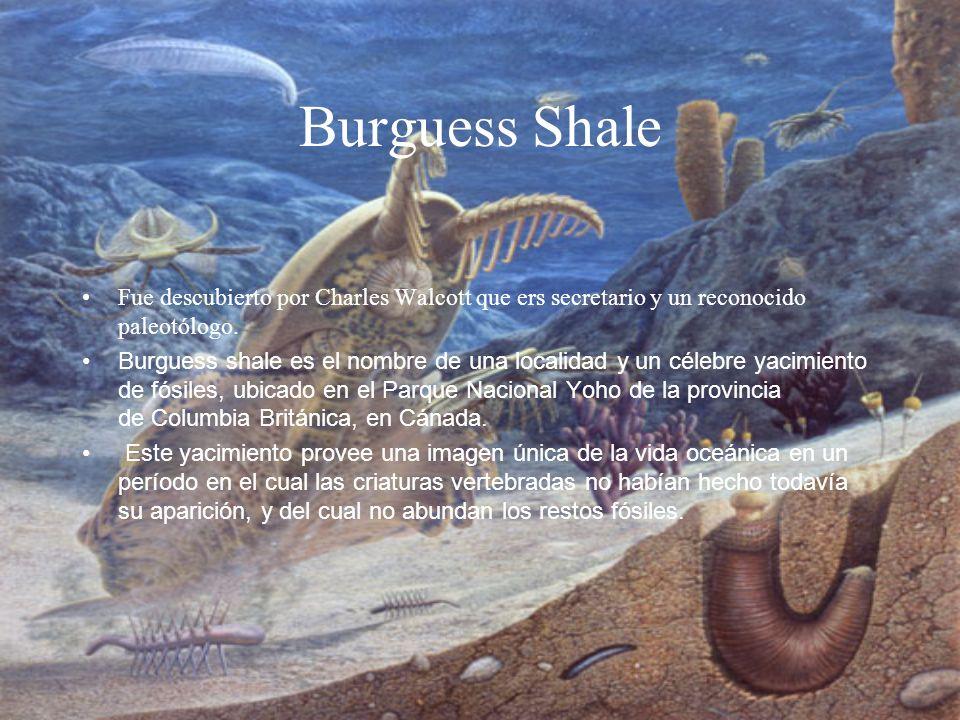 Burguess Shale Fue descubierto por Charles Walcott que ers secretario y un reconocido paleotólogo. Burguess shale es el nombre de una localidad y un c