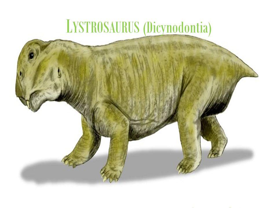 L YSTROSAURUS (Dicynodontia)