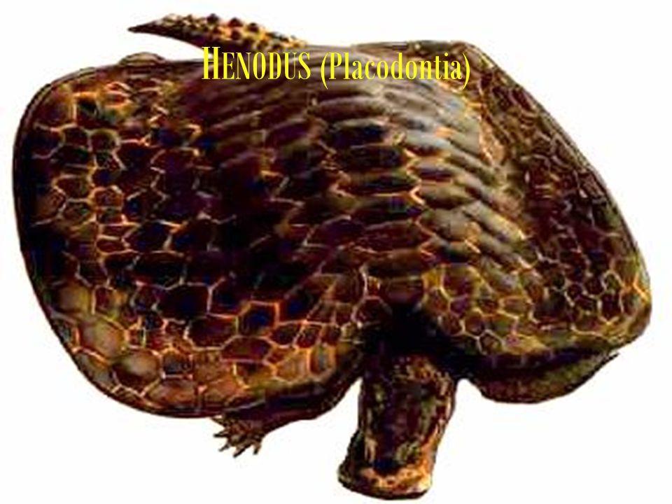H ENODUS (Placodontia)
