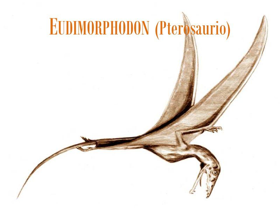 E UDIMORPHODON (Pterosaurio)