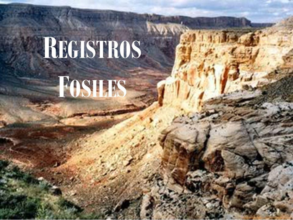 R EGISTROS F OSILES