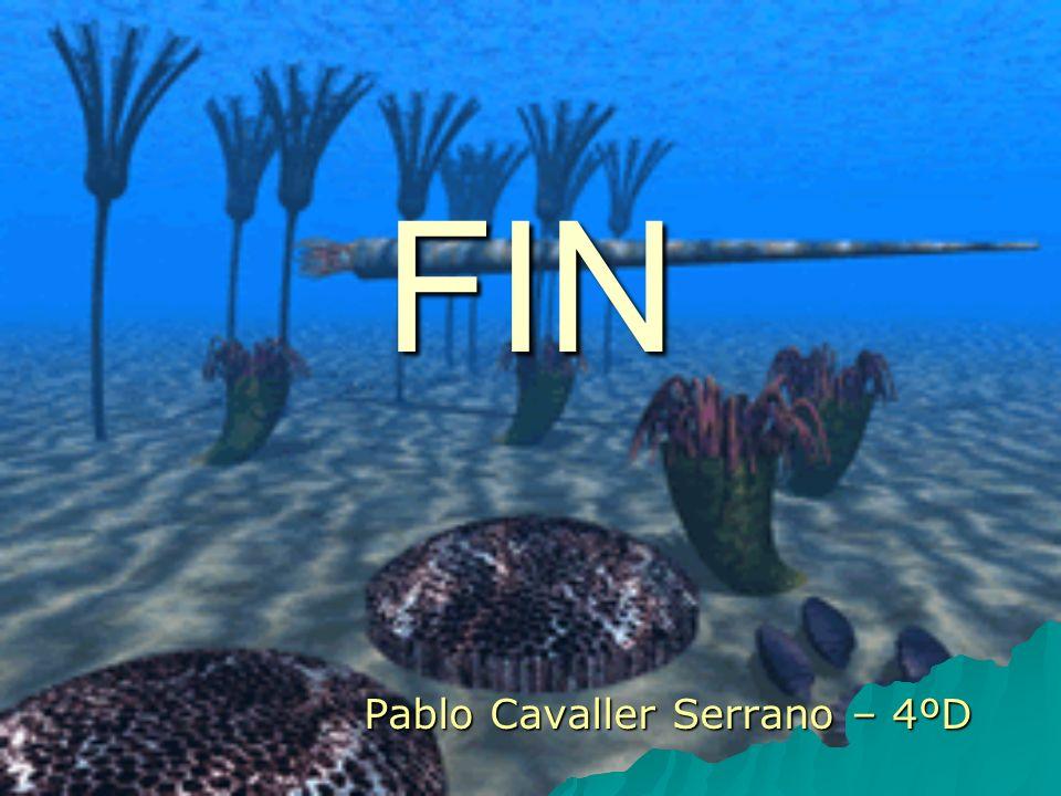 FIN Pablo Cavaller Serrano – 4ºD