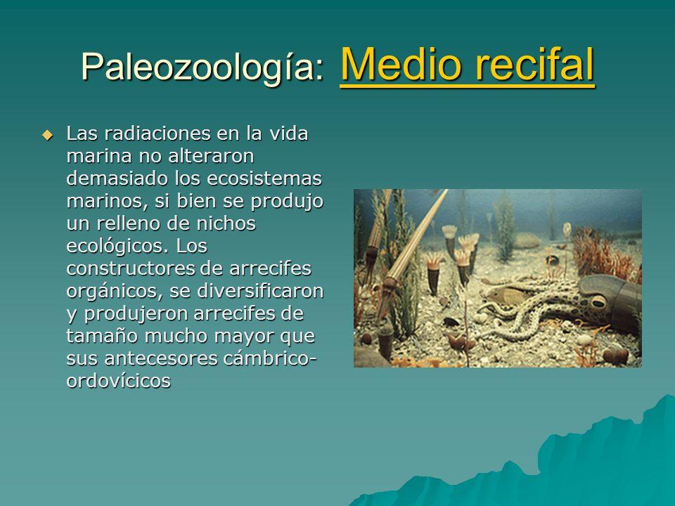 Paleozoología: Medio recifal Las radiaciones en la vida marina no alteraron demasiado los ecosistemas marinos, si bien se produjo un relleno de nichos