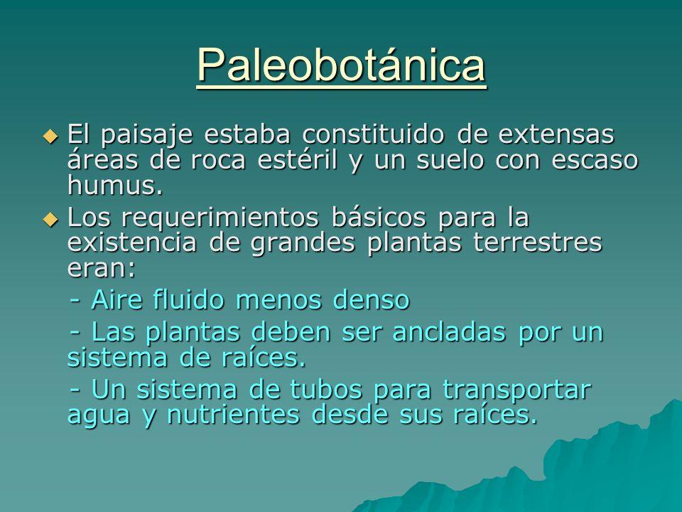 Paleobotánica El paisaje estaba constituido de extensas áreas de roca estéril y un suelo con escaso humus. El paisaje estaba constituido de extensas á