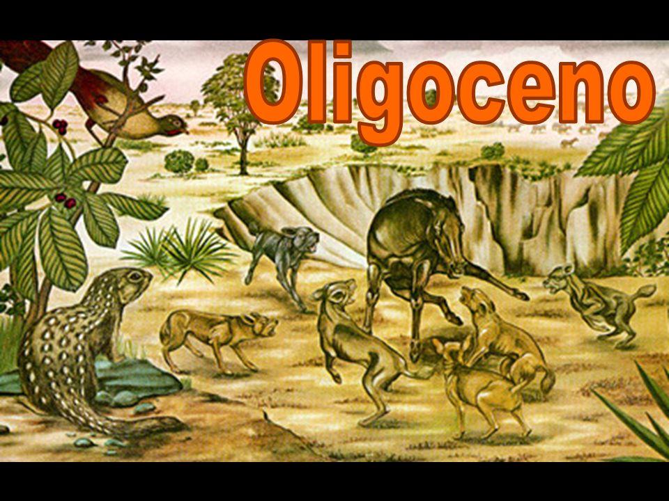 Era 1 PeríodoÉpocaMillones años Cenozoico Cuaternario Holoceno0,011784 Pleistoceno2,588 Neógeno Plioceno5,332 Mioceno23,03 Paleógeno Oligoceno33,9 ±0,1 Eoceno55,8 ±0,2 Paleoceno65,5 ±0,3 Titanotheres Rupeliano Chattiano