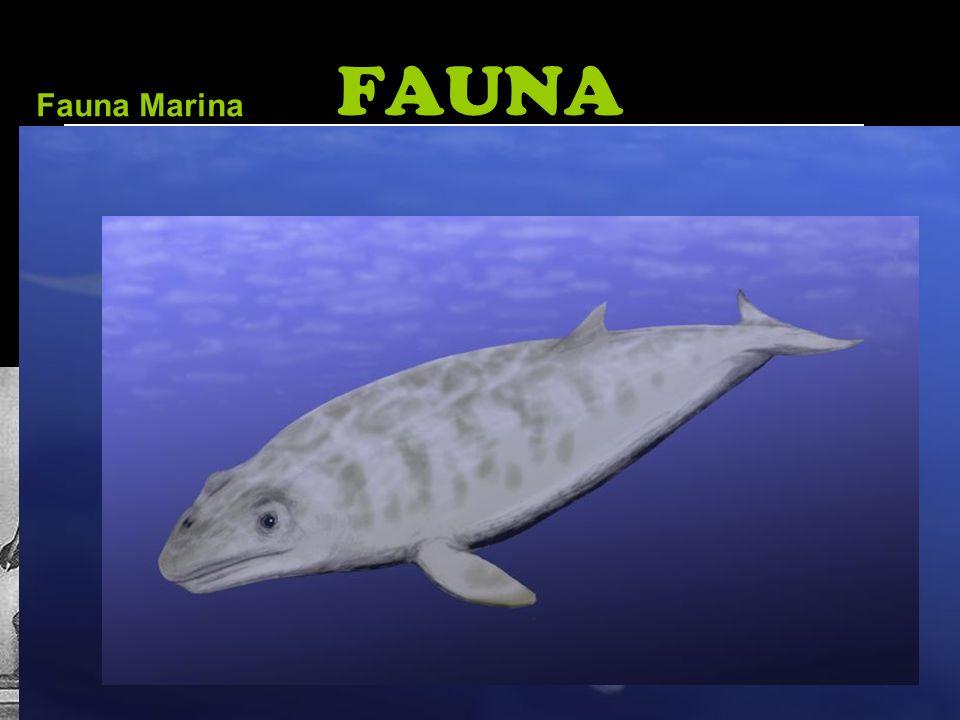 FAUNA Faunas terrestres destacables se encuentran en todos los continentes excepto Australia. Los paisajes más abierto permiten a los animales crecer