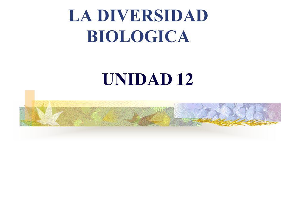 Videos biodiversidad http://www.youtube.com/watch?v=rmmCZ Y8vO7I http://www.youtube.com/watch?v=rmmCZ Y8vO7I La importancia de la biodiversidad http://www.youtube.com/watch?v=2Xip14iRi Jk&feature=related http://www.youtube.com/watch?v=2Xip14iRi Jk&feature=related http://www.youtube.com/watch?v=5bjPzn1dI NQ&feature=related