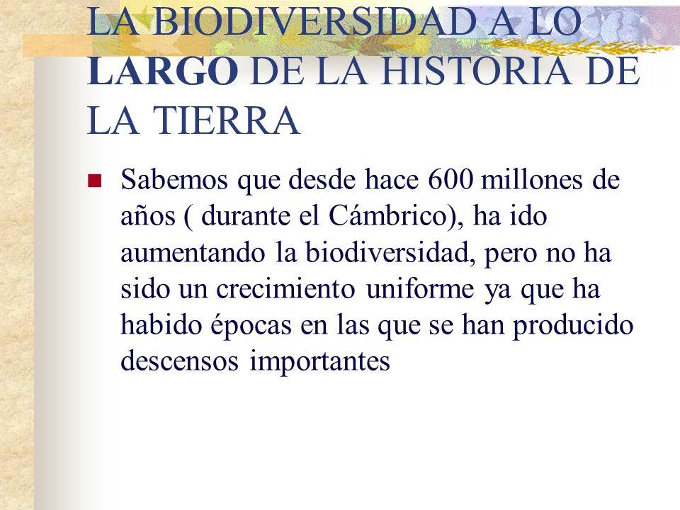 Extinciones. Estabilidad. Explosiones biológicas. LA BIODIVERSIDAD A LO LARGO DE LA HISTORIA DE LA TIERRA