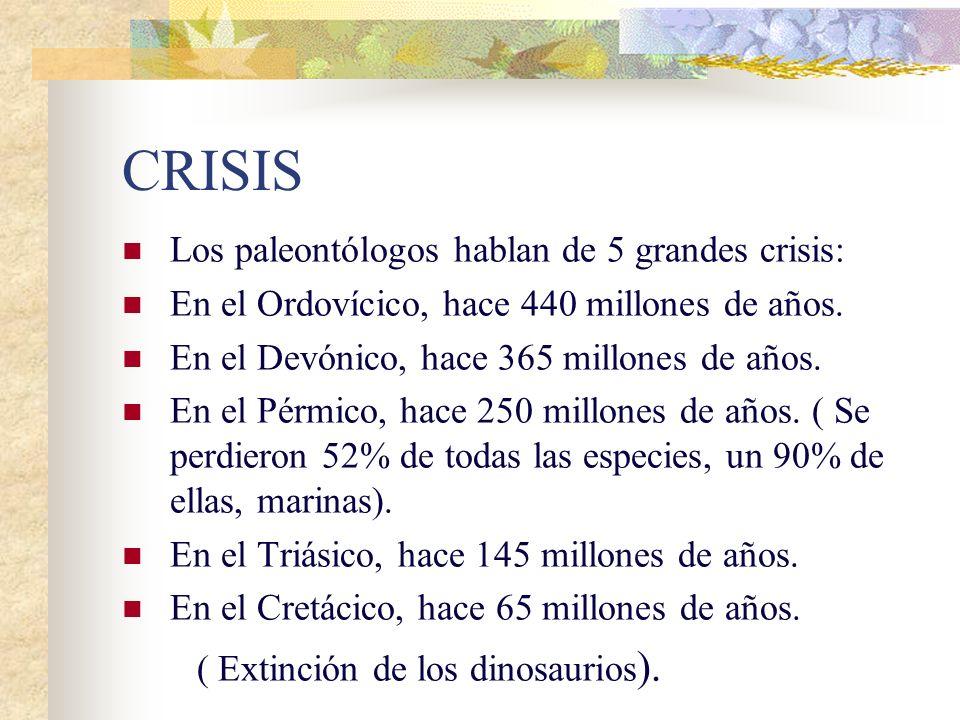 Sólo sobrevive el 1% de las especies que alguna vez han poblado la Tierra.