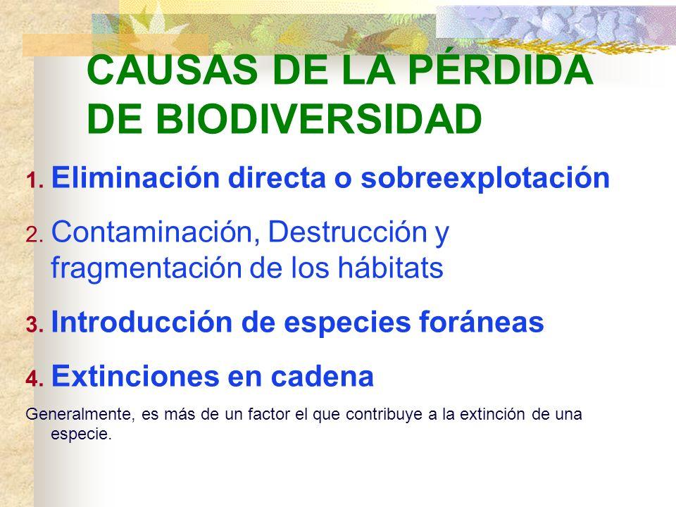 CAUSAS DE LA PÉRDIDA DE BIODIVERSIDAD - Actualmente, es la actividad humana la que está afectando a la Biosfera de forma más drástica y a escala globa