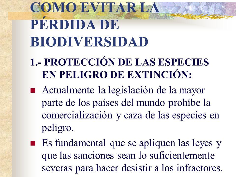 Videos biodiversidad http://www.youtube.com/watch?v=rmmCZ Y8vO7I http://www.youtube.com/watch?v=rmmCZ Y8vO7I La importancia de la biodiversidad http:/