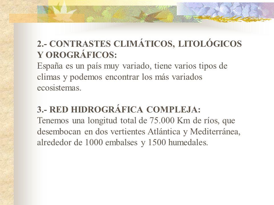 LA BIODIVERSIDAD EN ESPAÑA España es el país Europeo con mayor diversidad biológica, unas 80000 especies han sido catalogadas, esto se debe a unas car