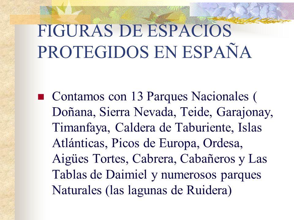 2.- CONTRASTES CLIMÁTICOS, LITOLÓGICOS Y OROGRÁFICOS: España es un país muy variado, tiene varios tipos de climas y podemos encontrar los más variados