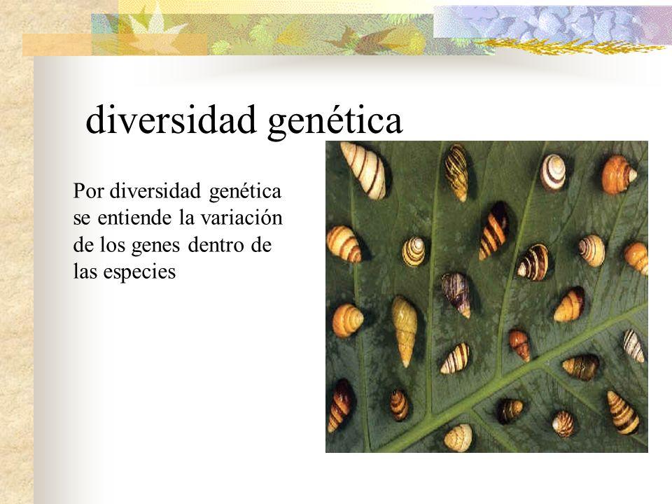 NIVELES de biodiversidad No solo podemos hablar de la variedad de las formas de vida, sino también del acervo genético de cada especie, conseguido tra