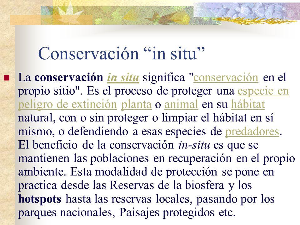 Ejemplo Lince ibérico: La fragmentación de su hábitat por grandes infraestructuras -como presas o carreteras-, la presencia de cebos envenenados o un
