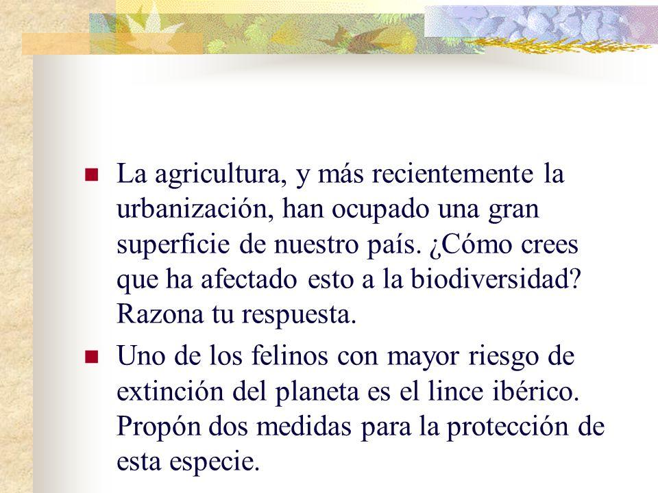 ejercicios 1)Define el concepto de diversidad biológica o biodiversidad. 2) ¿Qué representa el dibujo con relación a la biodiversidad?