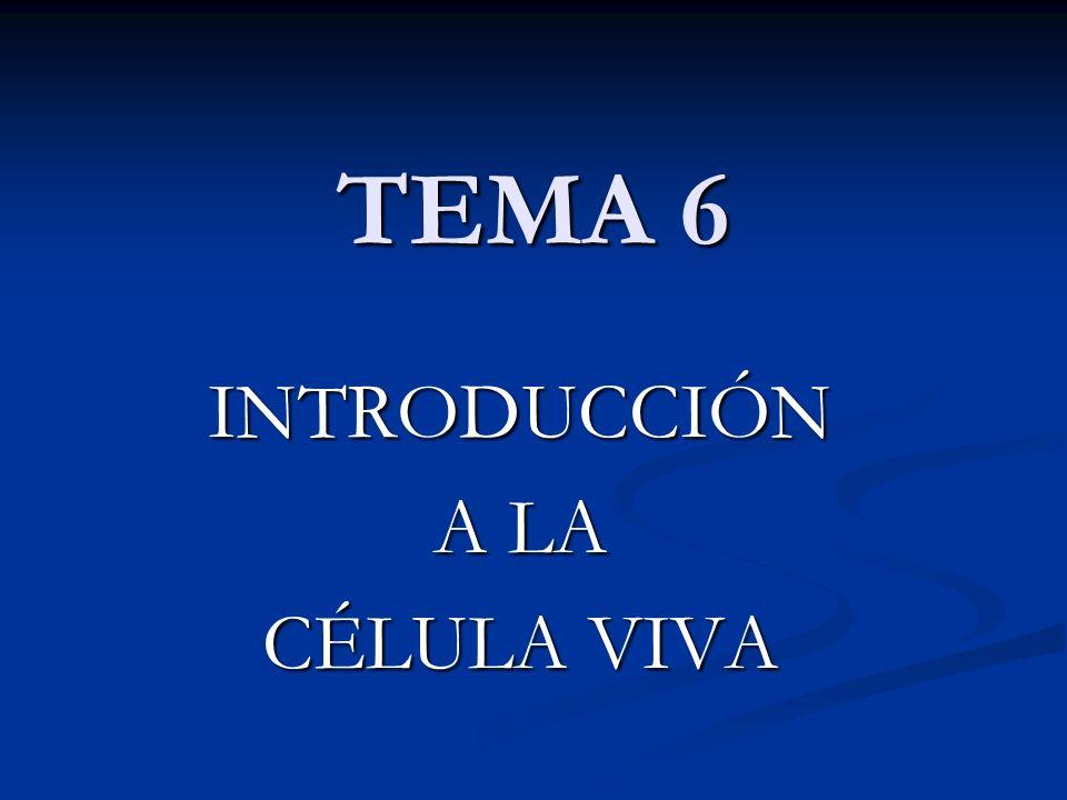 TEMA 6 INTRODUCCIÓN A LA CÉLULA VIVA