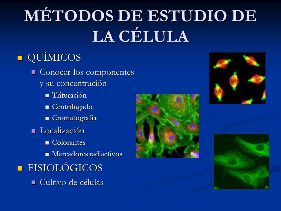 QUÍMICOS Conocer los componentes y su concentración Trituración Centrifugado Cromatografía Localización Colorantes Marcadores radiactivos FISIOLÓGICOS