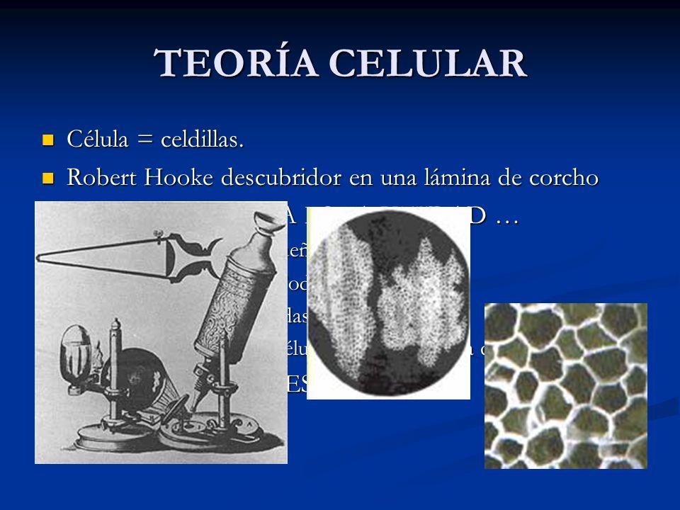 TEORÍA CELULAR Célula = celdillas. Célula = celdillas. Robert Hooke descubridor en una lámina de corcho Robert Hooke descubridor en una lámina de corc