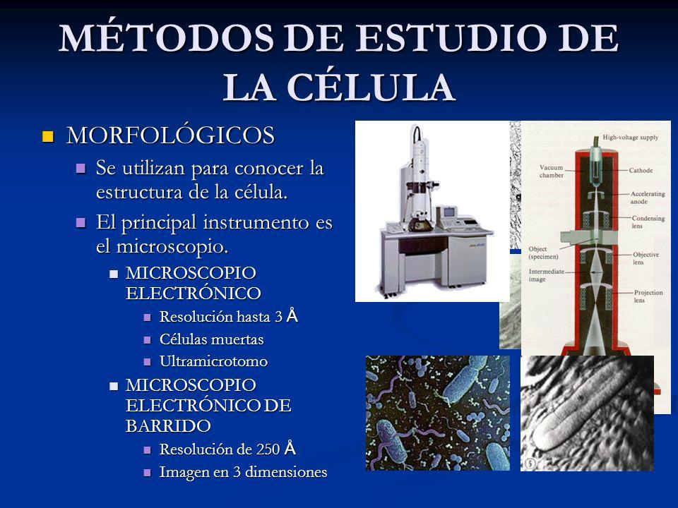 MÉTODOS DE ESTUDIO DE LA CÉLULA MORFOLÓGICOS MORFOLÓGICOS Se utilizan para conocer la estructura de la célula. Se utilizan para conocer la estructura