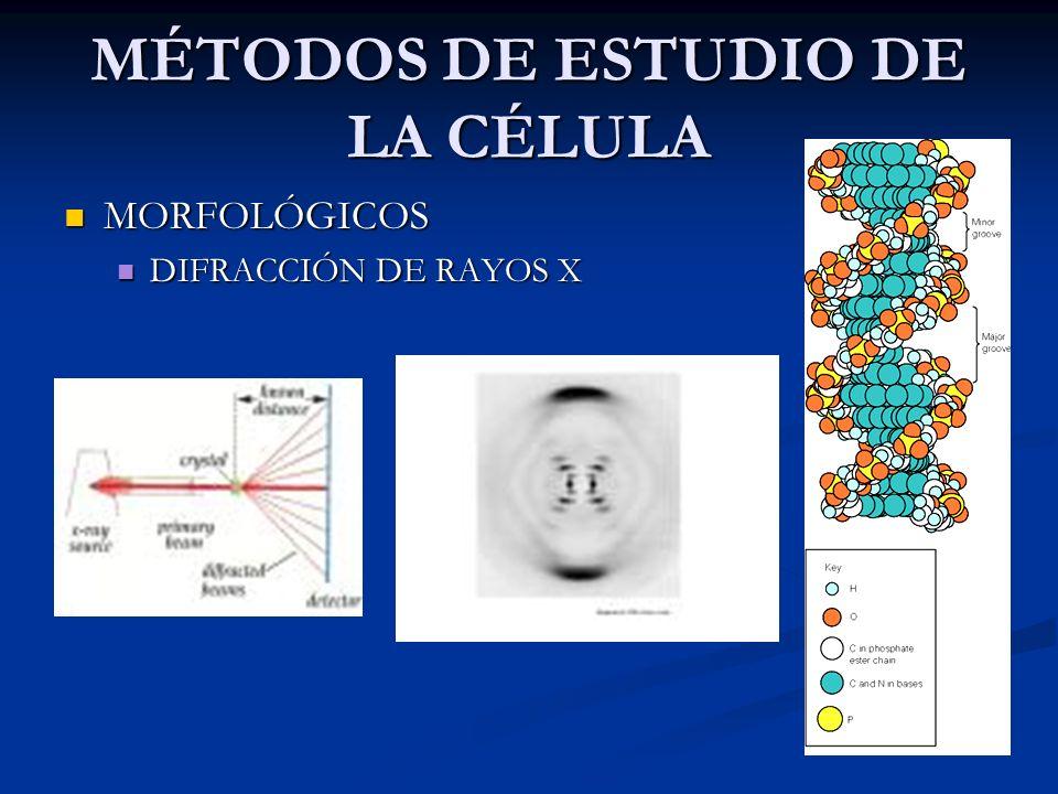 MÉTODOS DE ESTUDIO DE LA CÉLULA QUÍMICOS Conocer los componentes y su concentración Trituración Centrifugado Cromatografía