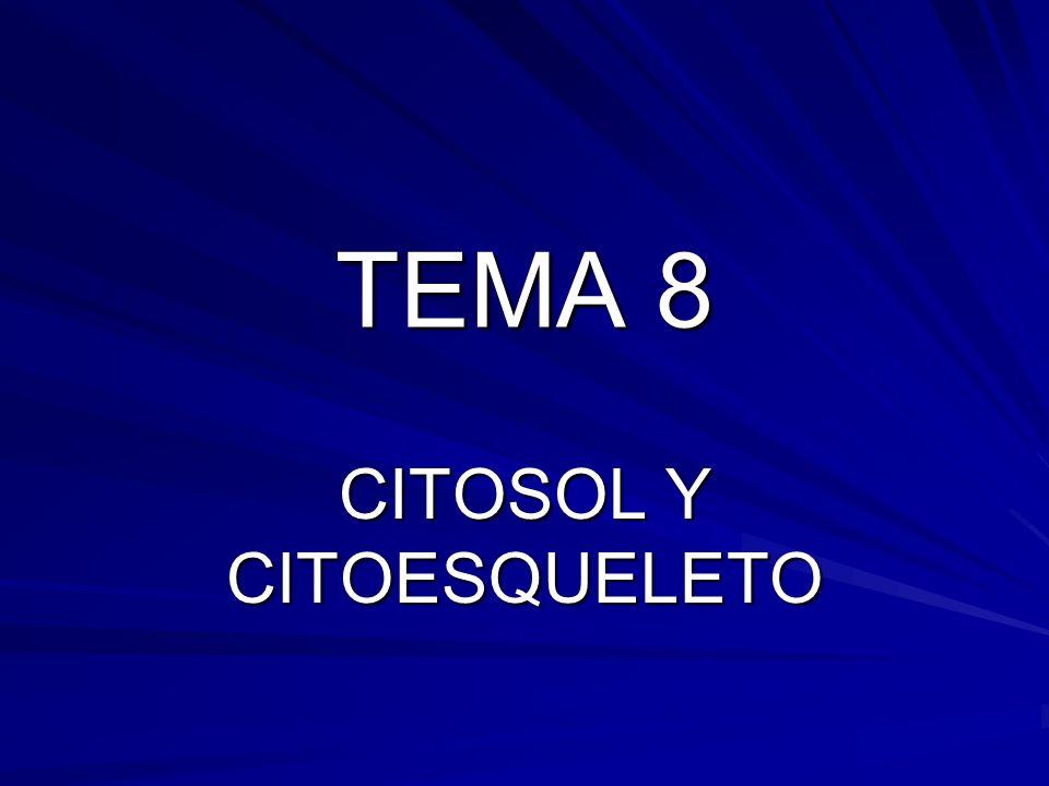 TEMA 8 CITOSOL Y CITOESQUELETO