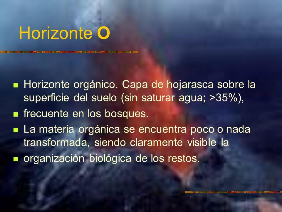 Horizonte O Horizonte orgánico. Capa de hojarasca sobre la superficie del suelo (sin saturar agua; >35%), frecuente en los bosques. La materia orgánic