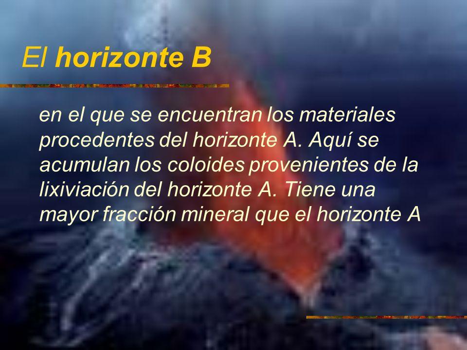El horizonte B en el que se encuentran los materiales procedentes del horizonte A. Aquí se acumulan los coloides provenientes de la lixiviación del ho