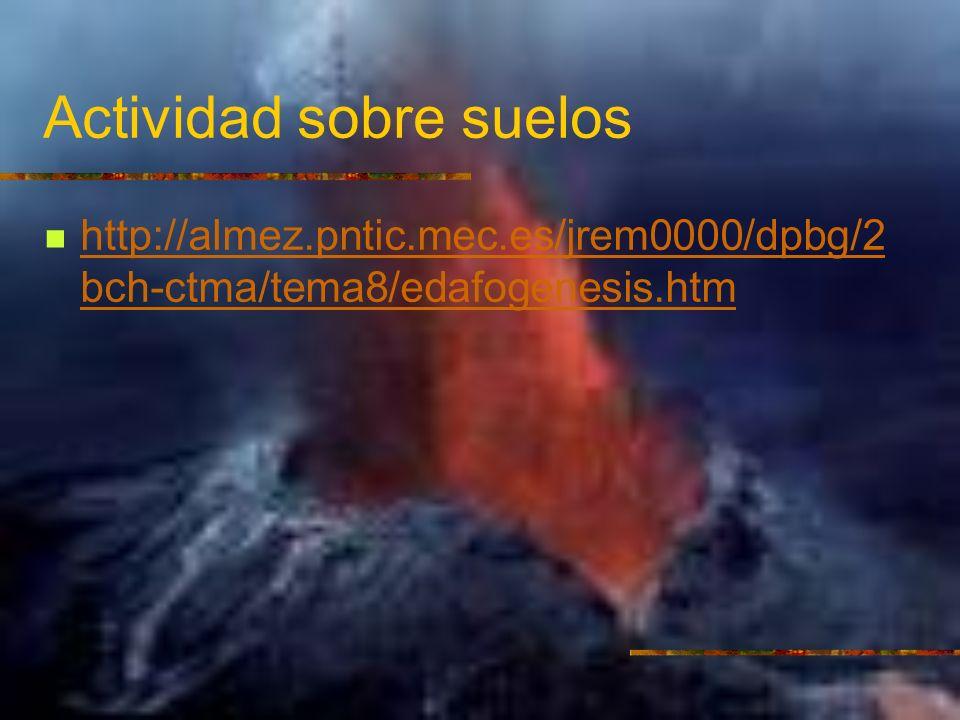 Actividad sobre suelos http://almez.pntic.mec.es/jrem0000/dpbg/2 bch-ctma/tema8/edafogenesis.htm http://almez.pntic.mec.es/jrem0000/dpbg/2 bch-ctma/te