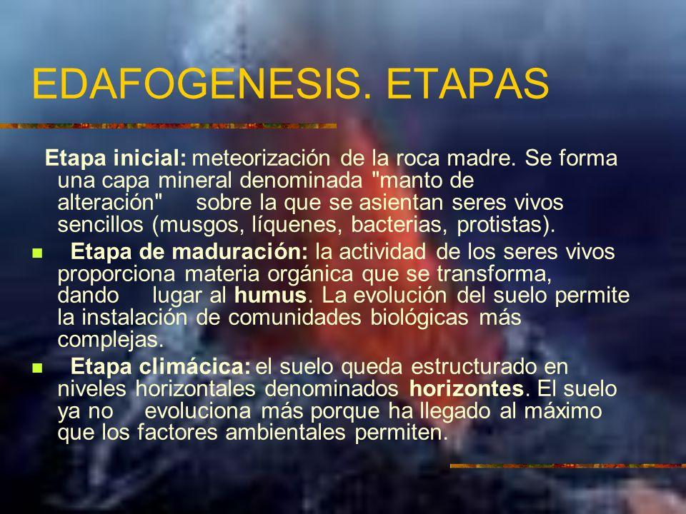 EDAFOGENESIS. ETAPAS Etapa inicial: meteorización de la roca madre. Se forma una capa mineral denominada