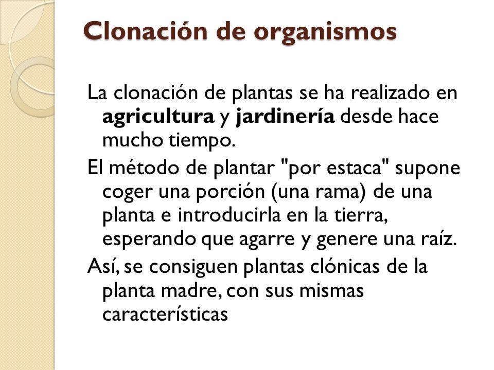 Clonación de organismos La clonación de plantas se ha realizado en agricultura y jardinería desde hace mucho tiempo.