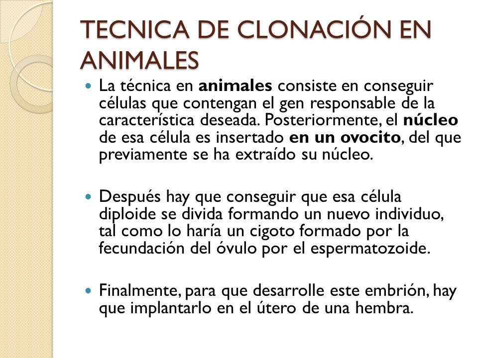 TECNICA DE CLONACIÓN EN ANIMALES La técnica en animales consiste en conseguir células que contengan el gen responsable de la característica deseada.