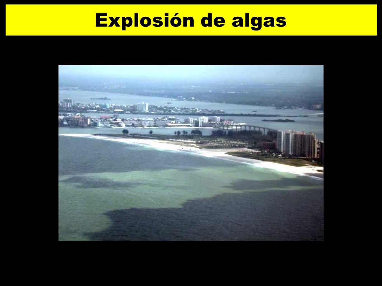 Explosión de algas