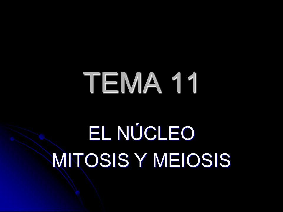 TEMA 11 EL NÚCLEO MITOSIS Y MEIOSIS