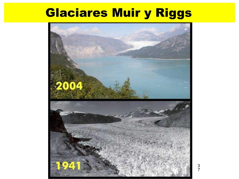 37 Glaciares Muir y Riggs