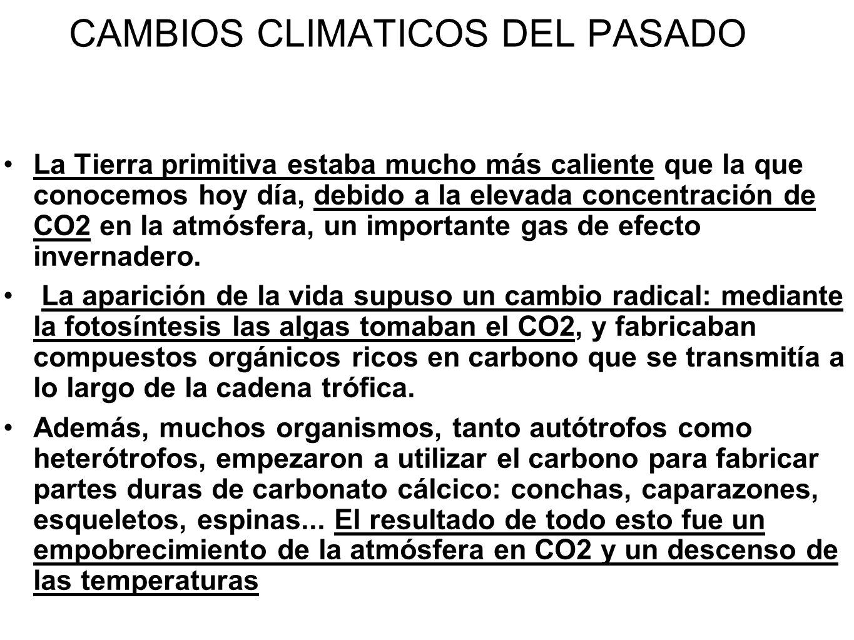 CAMBIOS CLIMATICOS DEL PASADO La Tierra primitiva estaba mucho más caliente que la que conocemos hoy día, debido a la elevada concentración de CO2 en
