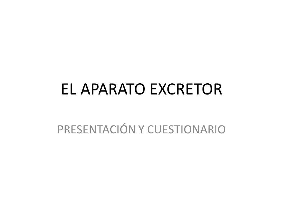 EL APARATO EXCRETOR PRESENTACIÓN Y CUESTIONARIO