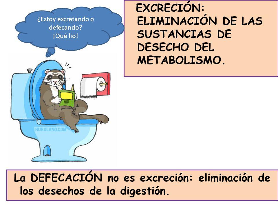 EXCRECIÓN: ELIMINACIÓN DE LAS SUSTANCIAS DE DESECHO DEL METABOLISMO. La DEFECACIÓN no es excreción: eliminación de los desechos de la digestión. ¿Esto