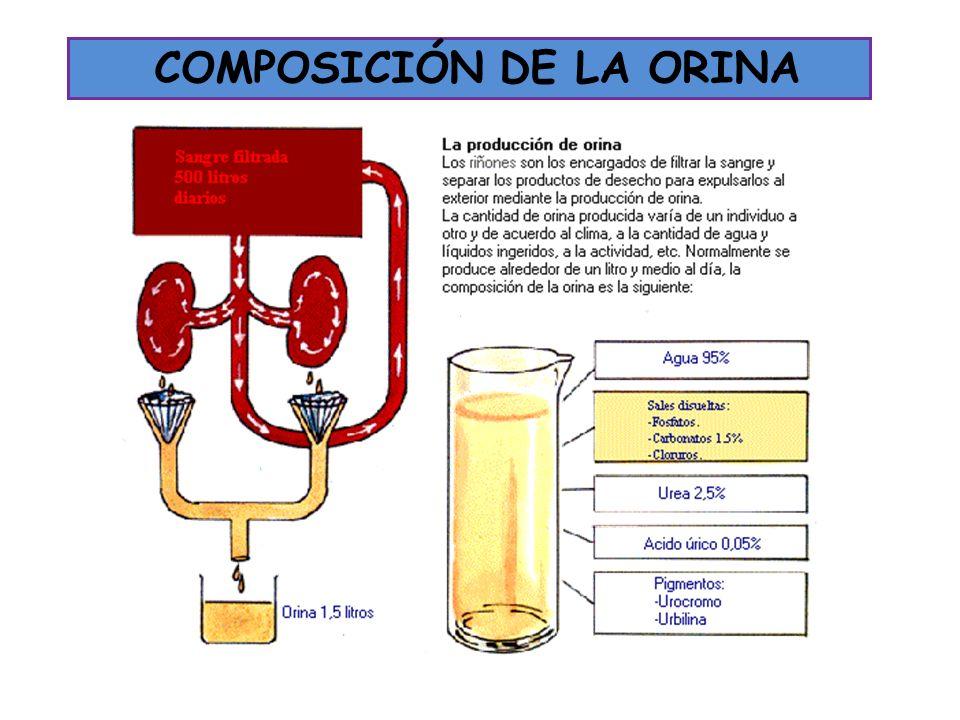 COMPOSICIÓN DE LA ORINA