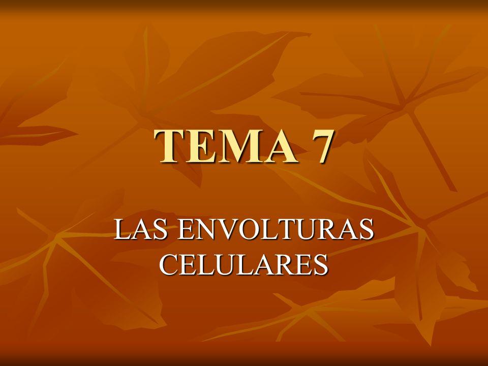 TEMA 7 LAS ENVOLTURAS CELULARES