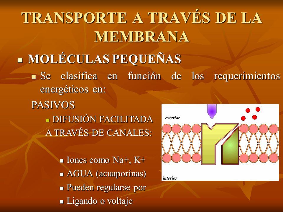 TRANSPORTE A TRAVÉS DE LA MEMBRANA MOLÉCULAS PEQUEÑAS MOLÉCULAS PEQUEÑAS Se clasifica en función de los requerimientos energéticos en: Se clasifica en